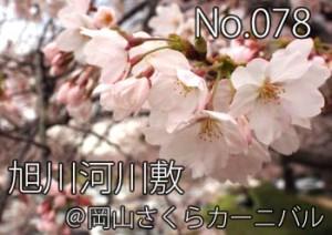asahigawa_sakura2012_000