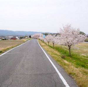 ashimori_kasen_003