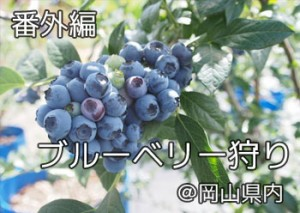 blueberry_nihsida_000