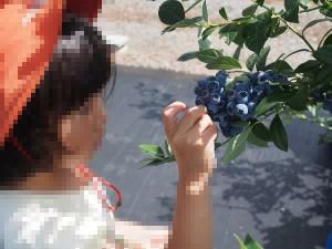 blueberry_nihsida_011