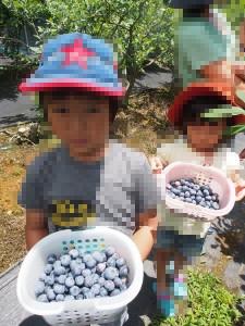 blueberry_nihsida_022