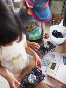 blueberry_nihsida_023