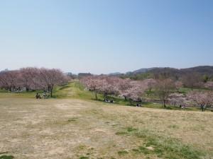 hyakengawa_bunryu_006