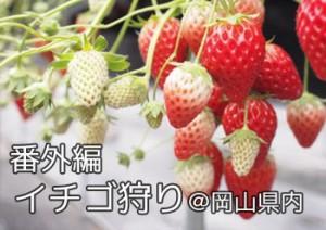 ichigo2013_000