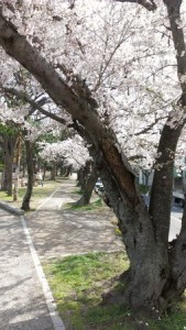 ishiyama_004