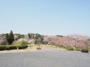 kagurao_001