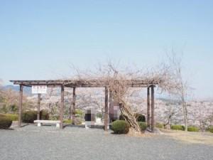 kagurao_002