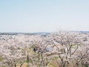 kagurao_004