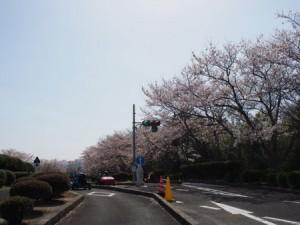kagurao_024