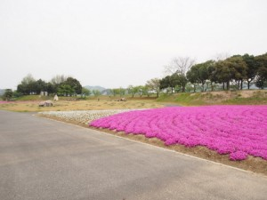 kasaoka_taiyo_069
