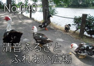 kiyonefuru01_000
