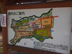 kotorino_mori_002