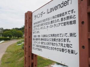 makibano_yakata_036