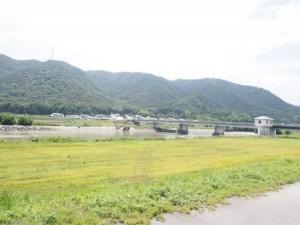 makibi_sakura_001