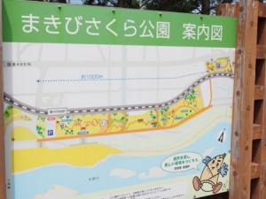 makibi_sakura_003