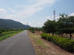 makibi_sakura_035