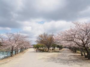 saidaiji_mukousu_031