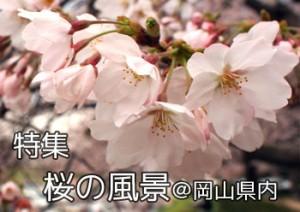 sakurano_fuukei_000
