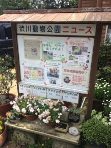 shibukawa_doubutsu_005