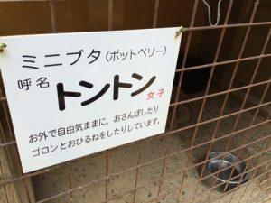 shibukawa_doubutsu_017