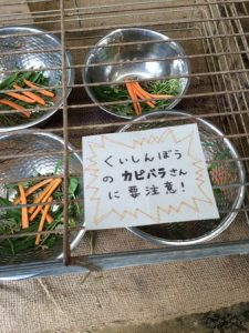 shibukawa_doubutsu_024