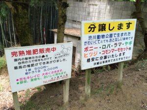 shibukawa_doubutsu_041