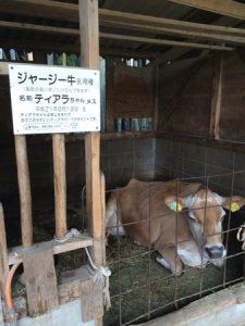 shibukawa_doubutsu_051