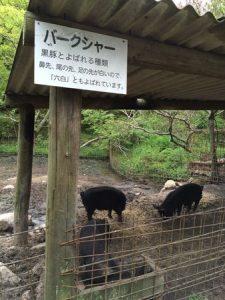 shibukawa_doubutsu_061
