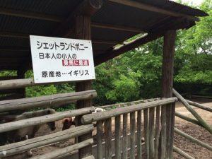 shibukawa_doubutsu_071