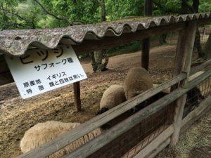 shibukawa_doubutsu_075
