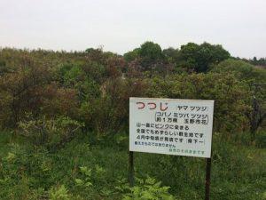 shibukawa_doubutsu_080