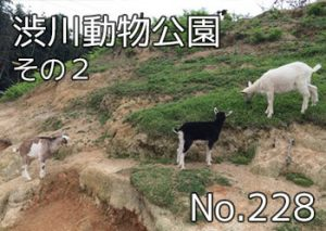 shibukawa_doubutsu_101