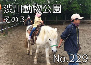 shibukawa_doubutsu_300