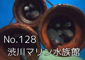 shibukawa_marin_000