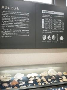 shibukawa_marin_049