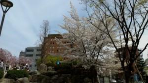 shimoishii_030