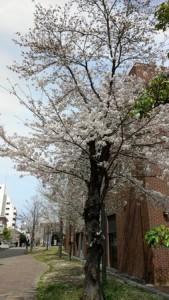 shimoishii_031