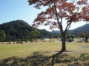 tamano_miyama_037