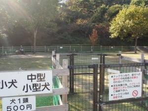 tamano_miyama_051