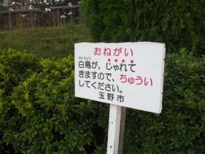 tamano_miyama_068