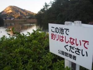tamano_miyama_073