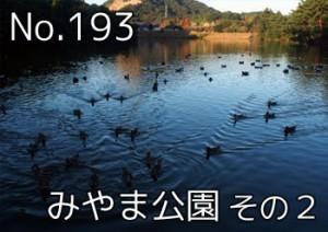 tamano_miyama_702