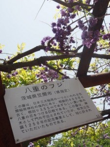 wake_fuji_023