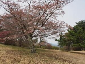 yayakayama_060